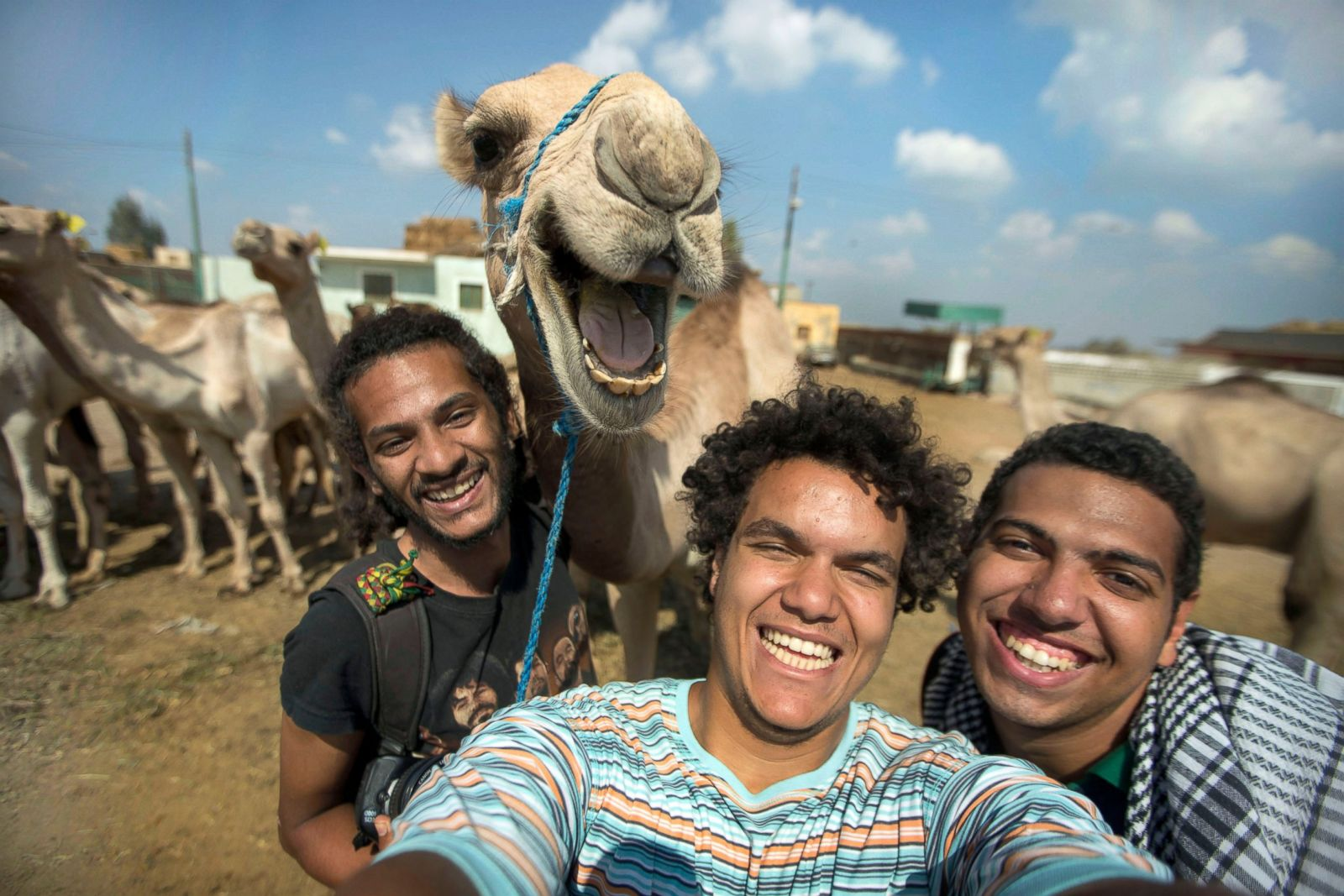 Camel selfies are the best