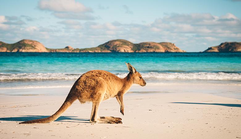 Australian sea side with a Kangaroo