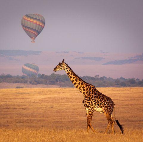 Kenya, Hot air balloon